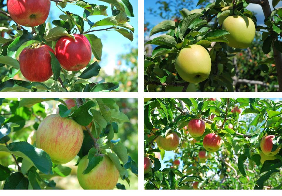 apple_img_1